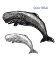 Sperm whale isolated sketch icon vector image
