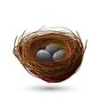 Bird Nest With Eggs vector image