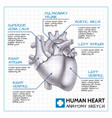 medical internal organ concept vector image