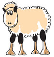 white sheep vector image