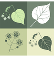 Lime Tree vector image
