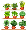 different kinds of plants in clay pots vector image vector image