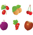 One fresh plum on the white backgroundcouple of ch vector image vector image