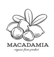hand drawn macadamia icon vector image