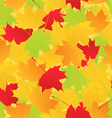 maple leaves background vector image