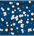 white plum blossom flower on indigo blue vector image