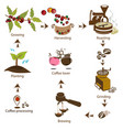 coffee processing step by step vector image