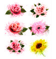 set of greeting cards with defferent flowers vector image