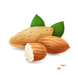 almonds kernels and leaves realistic vector image