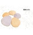 seashells vector image