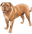 French Mastiff Vector Image