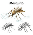 drafting character for mosquito vector image