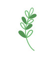 silhouette branch with leaves natural plant design vector image