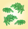 Christmas decorations spruce twigs vector image