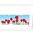 Tulips meadow banner vector