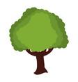 beautiful tree isolated vector image
