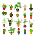green plants in pot set icons 3d isometric view vector image