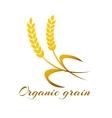 Wheat ear symbols for logo design vector image