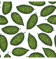 dieffenbachia tropical leaf seamless pattern vector image vector image