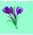Spring flowers Crocus saffron Flet design vector image