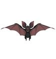 Funny bat smiling vector image