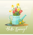 watering can and tulip snowdrop narcissus flower vector image