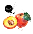Hand drawn watercolor painting peach on white