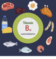 Vitamin B12 or Cobalamin infographic vector image