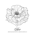 Greeting card with rose ink sketch vector image vector image