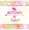 Big autumn sale EPS 10 vector image vector image
