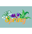 Spring flowers Crocus saffron lily of the valley s vector image