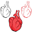 Heart human body anatomy red sketch vector image