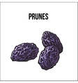 Pile of dried prunes sketch style hand drawn vector image