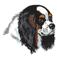 tricolor cavalier king charles spaniel vector image vector image