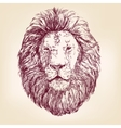 Lion hand drawn llustration realistic sketch vector image vector image
