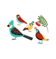 Colorful biirds set vector image