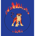 Tiger with flaming ring vector image