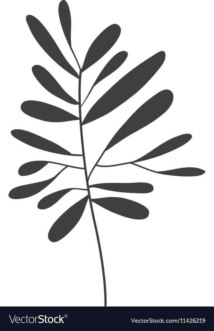 Gray scale small leaves olive vector