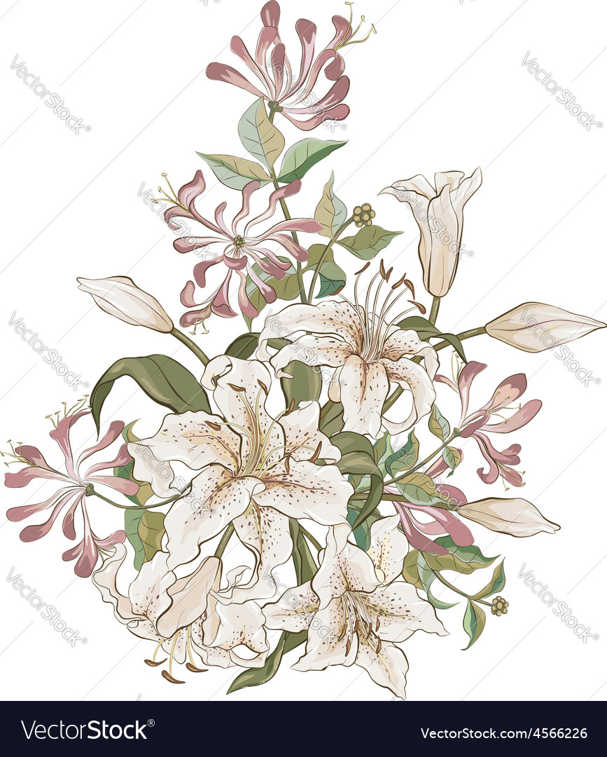 Bunch of lilies and honeysuckle vector