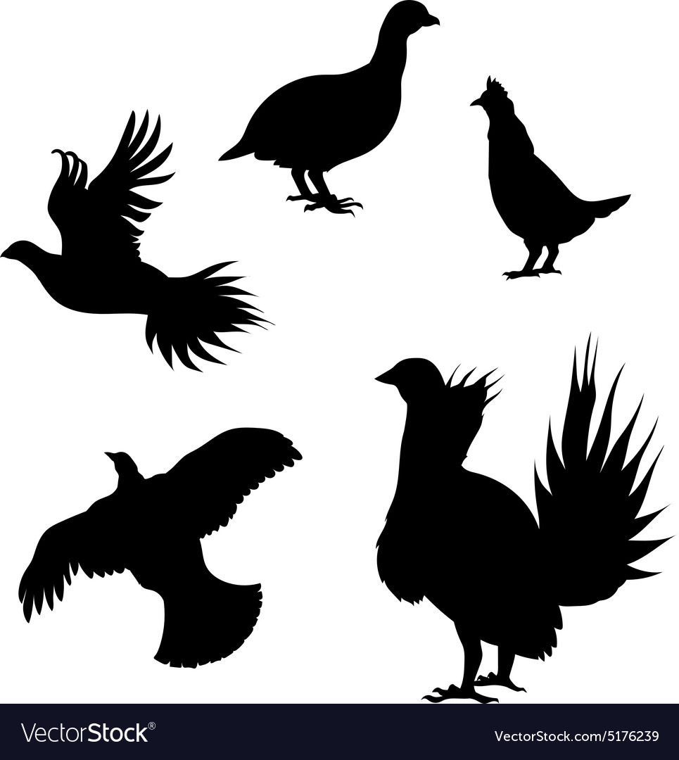 Silhouettes of a grouse vector
