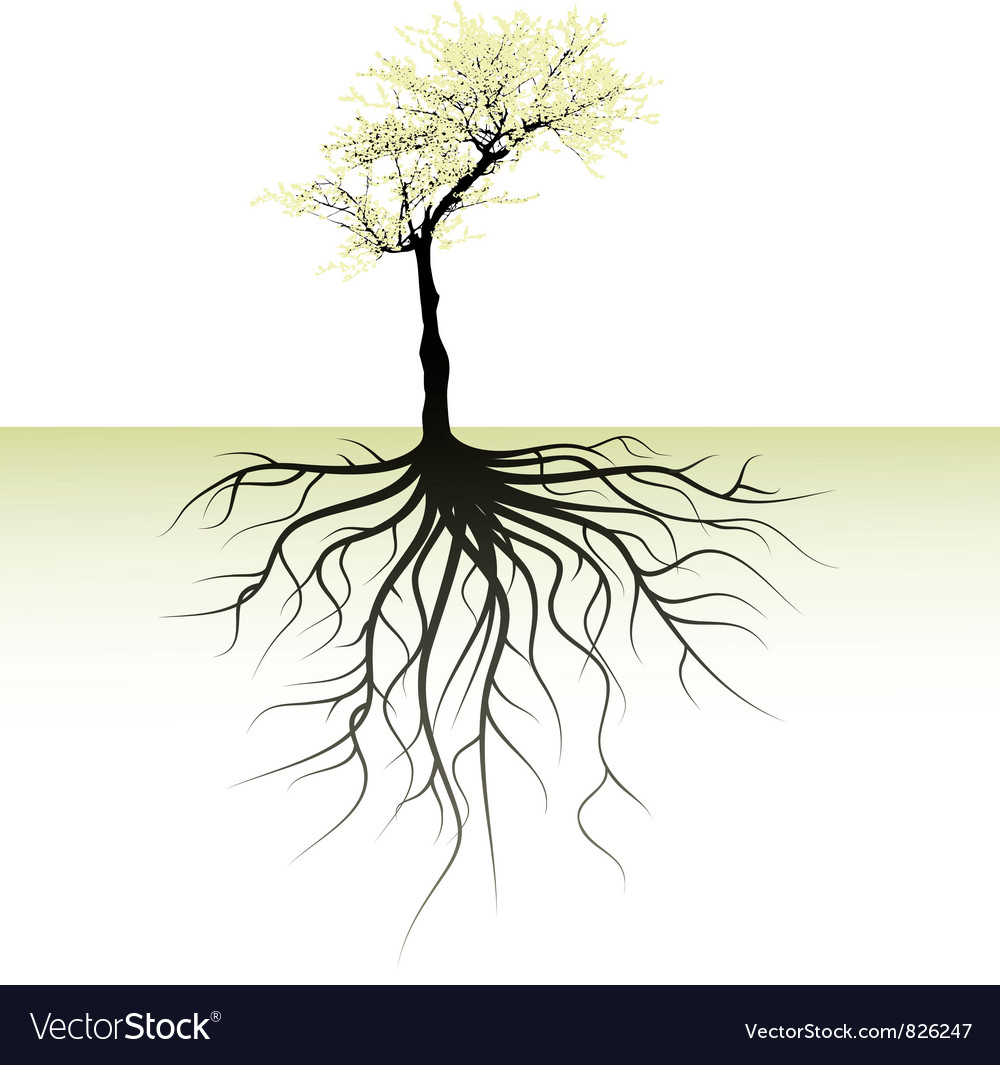 Blooming tree with root vector