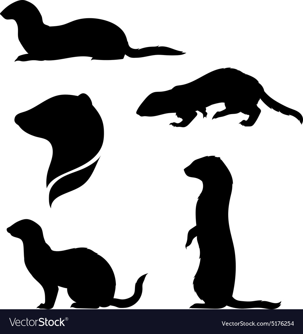 Silhouettes of a ferret vector