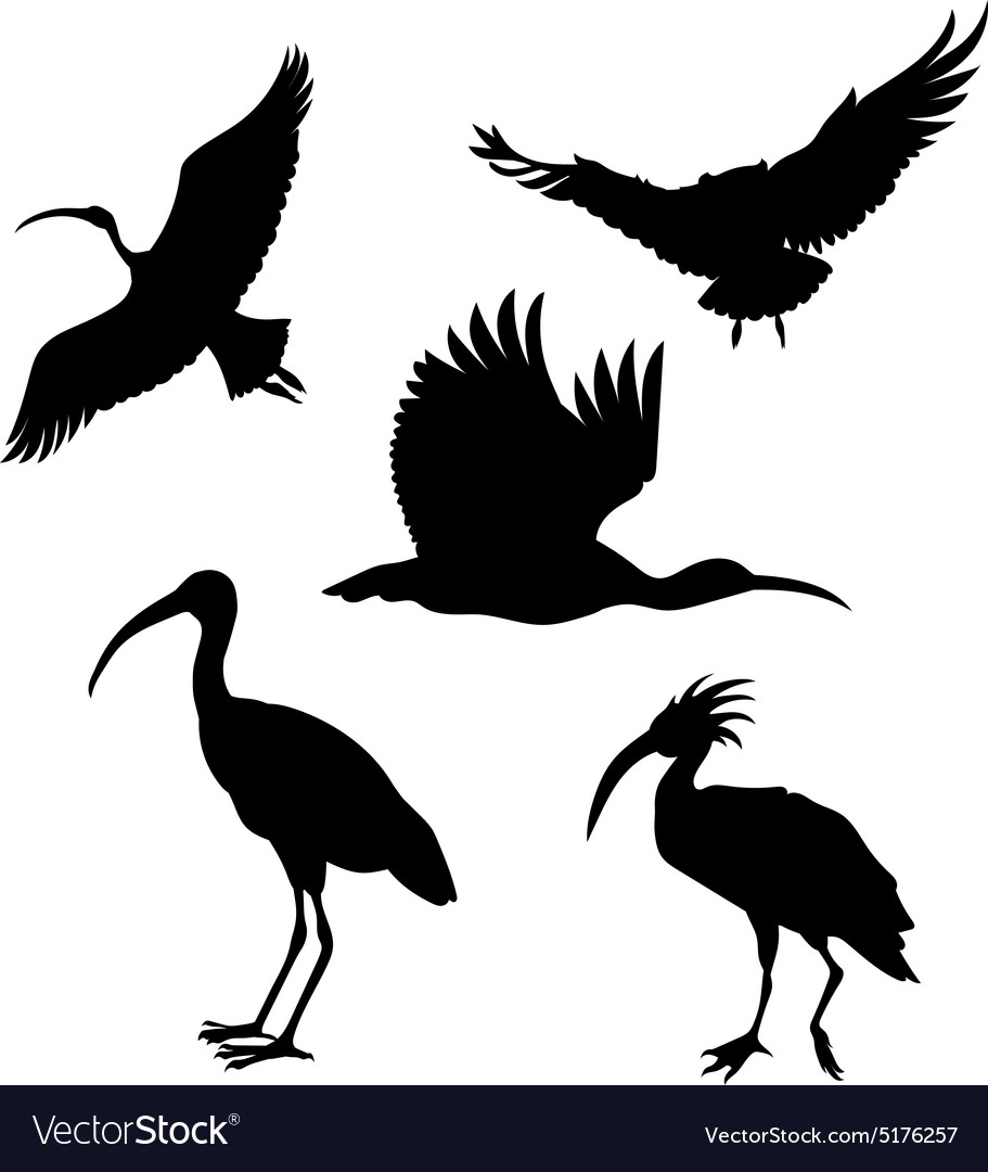 Silhouettes of a ibis vector