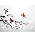 Branch and birds bullfinch vector image