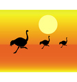 running ostriches vector image vector image