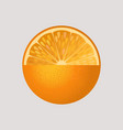 orange fruit isolated vector image