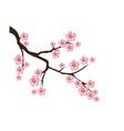 cherry flower vector image vector image