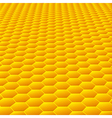 Honeycombs vector image vector image