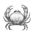 Crab Engraving vector image vector image