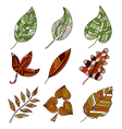 set of 9 leaves vector image vector image